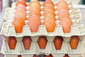 Egg_Flat