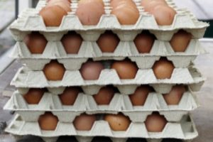 eggs_for_sale_1