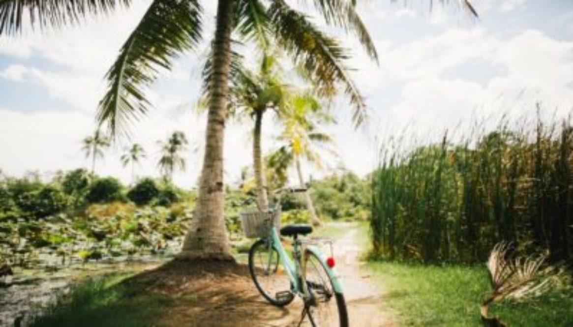 bicycle-under-tree