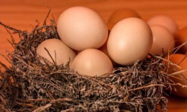 fresh -eggs